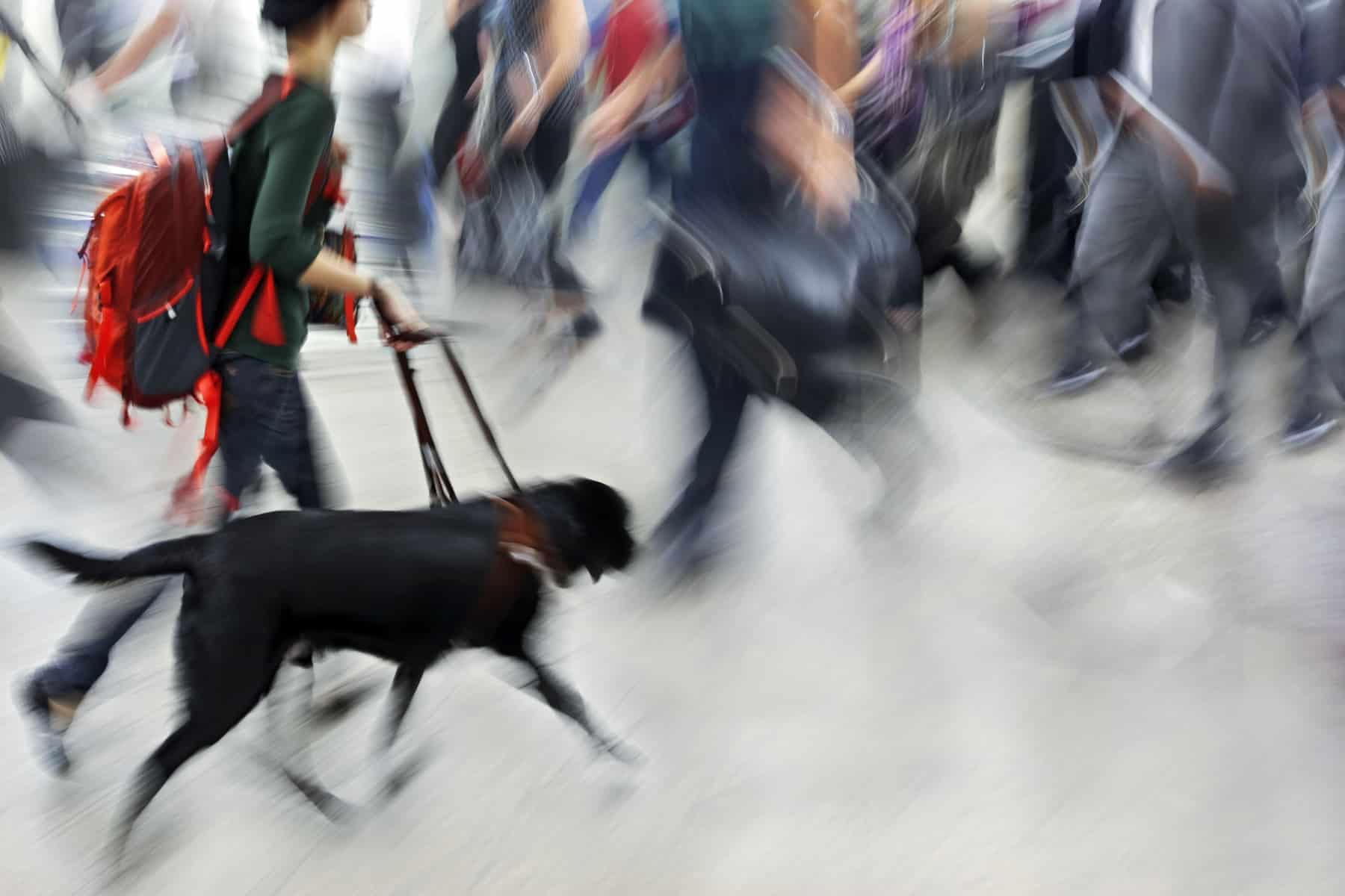 person with service animal hurries among a crowd, blurry image