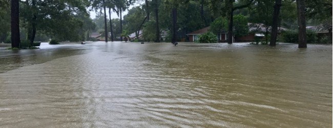 Photo of flooded street surrounded by trees.