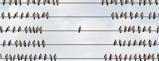 Bird sitting alone on a wire, with groups of other birds surrounding it.
