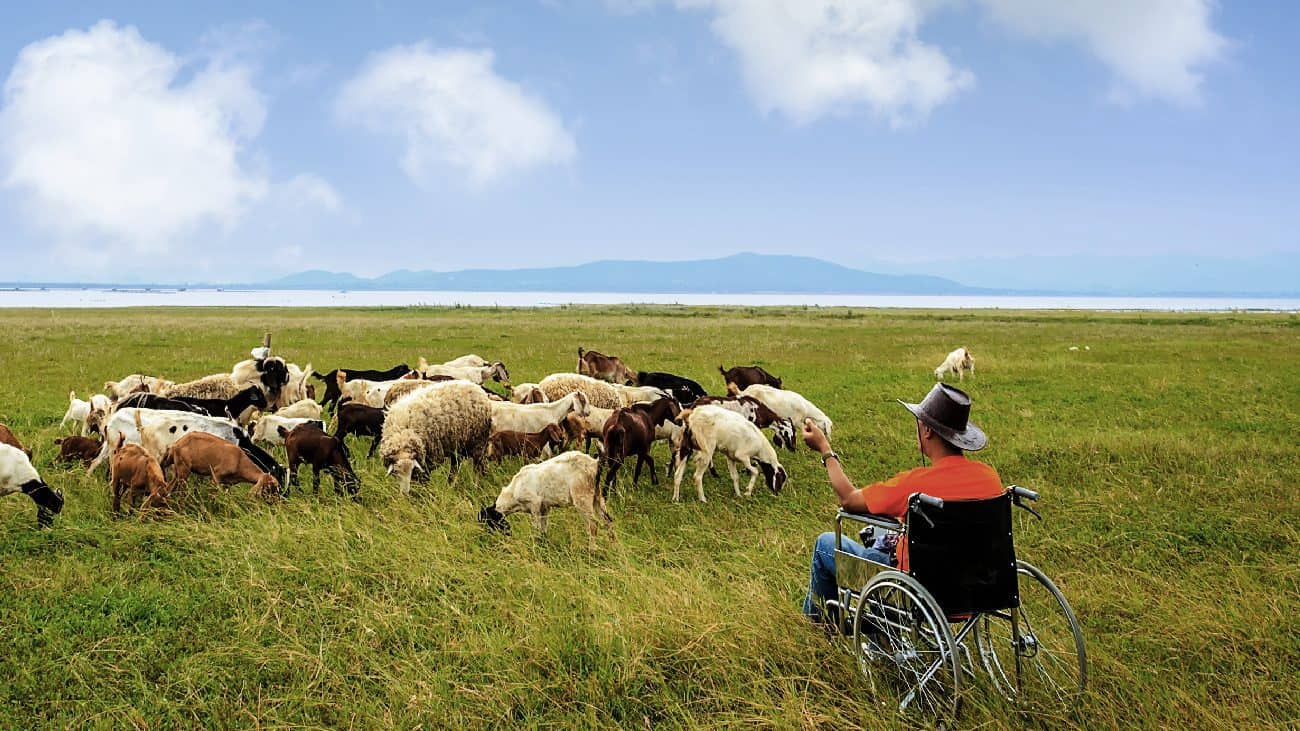 A man in a manual wheelchair sits in a pictoral field and faces a herd of goats.