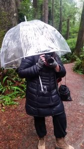 Allexa under a clear umbrella holding a camera in the green forest of the Olympic Peninsula.
