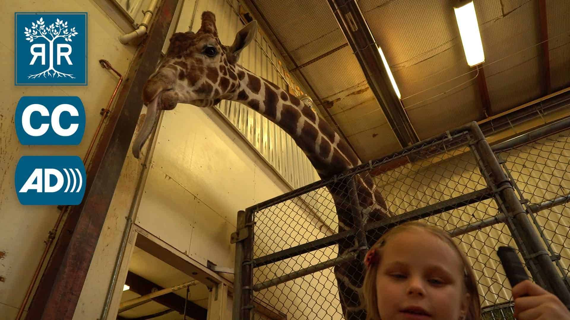 Lyla stands with her cane in front of a giraffe in the giraffe barn